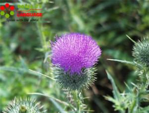 Loài hoa biểu tượng của các vùng trong Vương Quốc Anh
